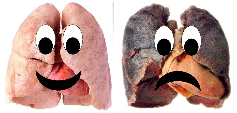 smokers lungs vs healthy lungs copy arousing grammar